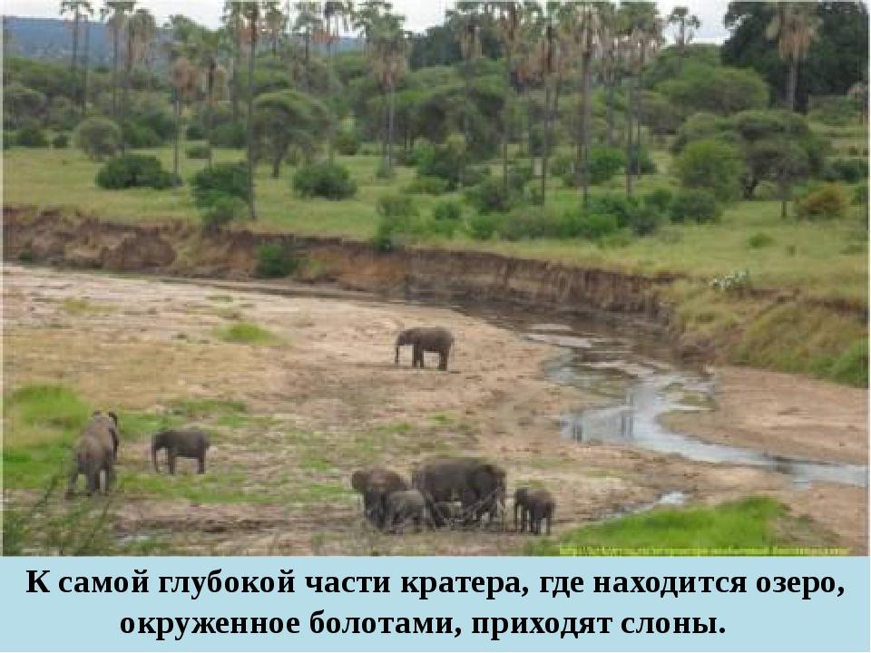 К самой глубокой части кратера, где находится озеро, окруженное болотами, при...