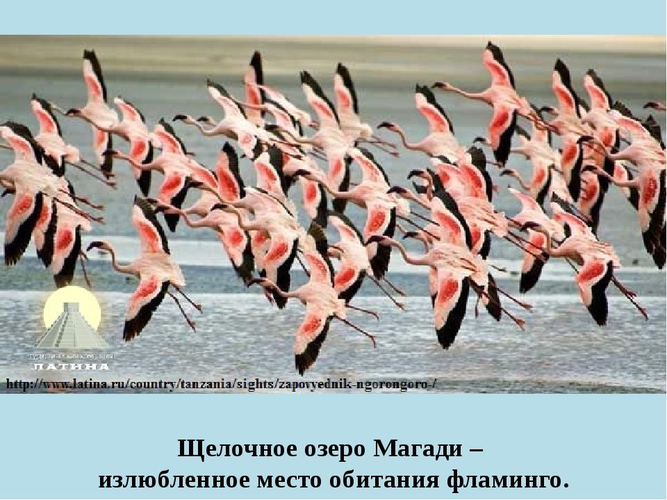 Щелочное озеро Магади – излюбленное место обитания фламинго.
