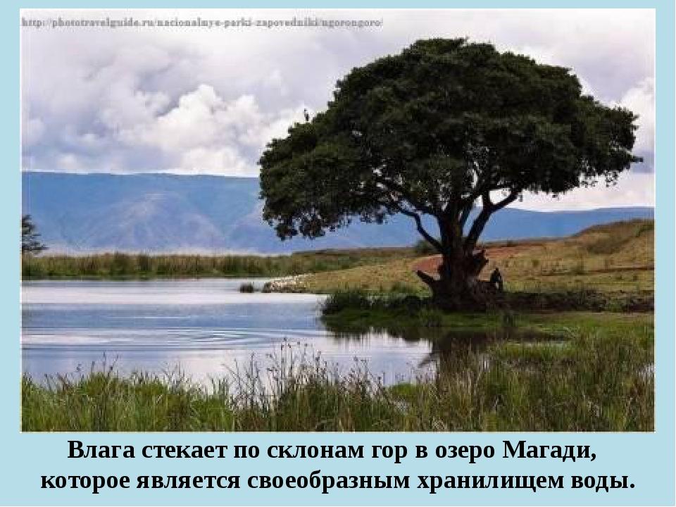 Влага стекает по склонам гор в озеро Магади, которое является своеобразным х...