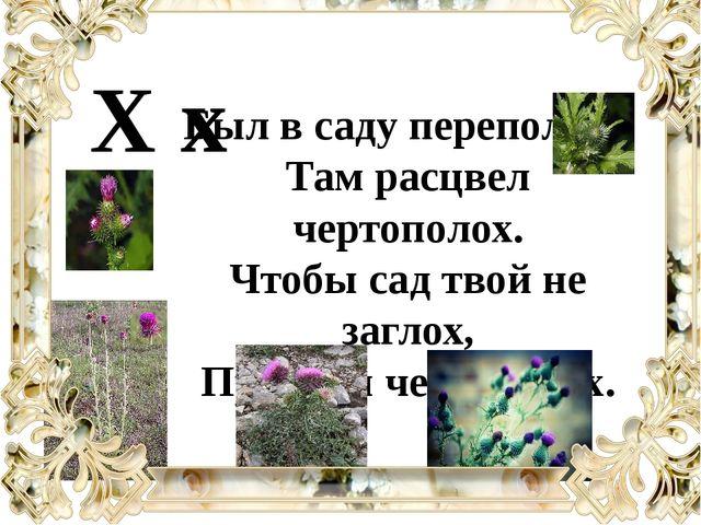 Был в саду переполох - Там расцвел чертополох. Чтобы сад твой не заглох, Проп...