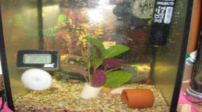 Разведение рыб в домашних аквариумах всегда было популярным хобби