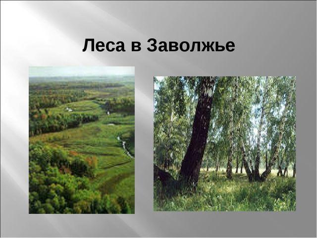 Леса в Заволжье