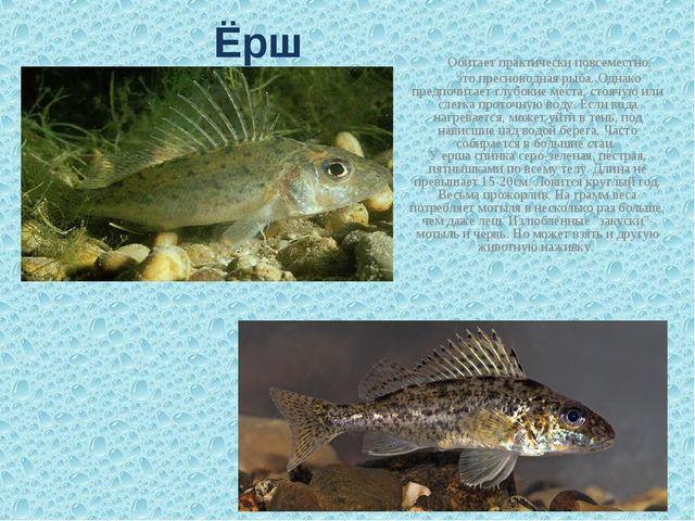 Обитает практически повсеместно, это пресноводная рыба. Однако предпочитает...