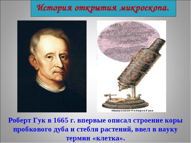 История открытия микроскопа. Роберт Гук в 1665 г. впервые описал строение кор...