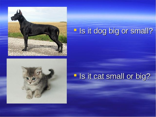 Is it dog big or small? Is it cat small or big?