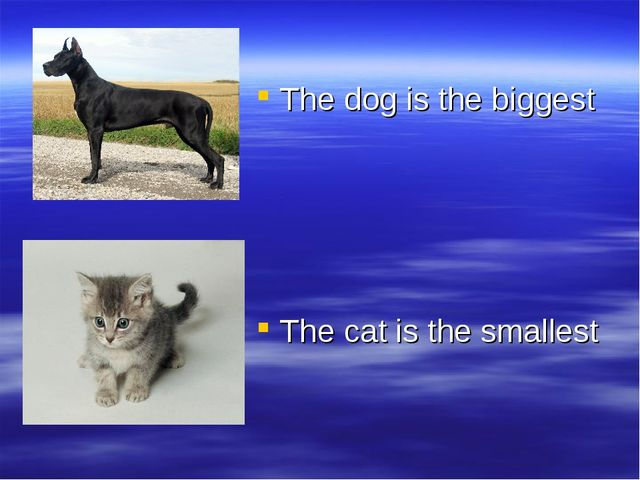 The dog is the biggest The cat is the smallest