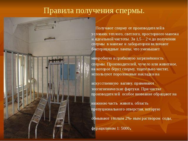 Правила получения спермы. Получают сперму от производителей в условиях теплог...