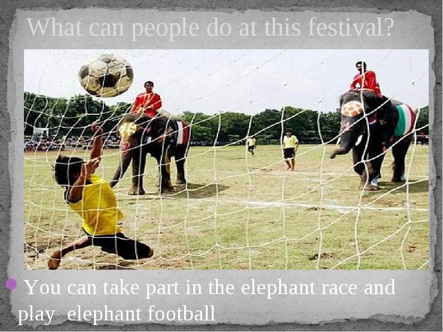 You can take part in the elephant race and play elephant football What can pe...