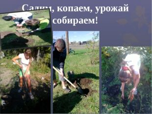 Садим, копаем, урожай собираем!