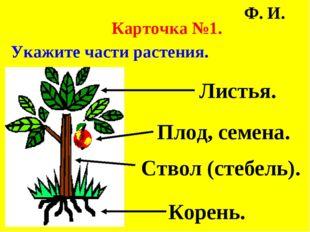Карточка №1. Укажите части растения. Ф. И. Листья. Плод, семена. Ствол (стеб