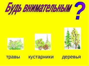 травы кустарники деревья