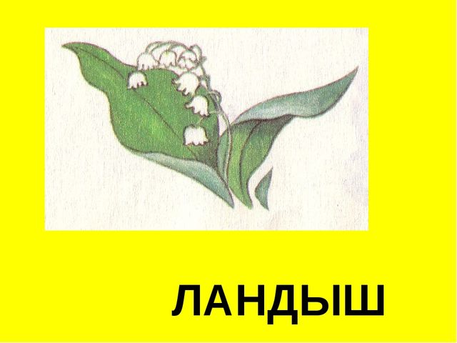 ЛАНДЫШ