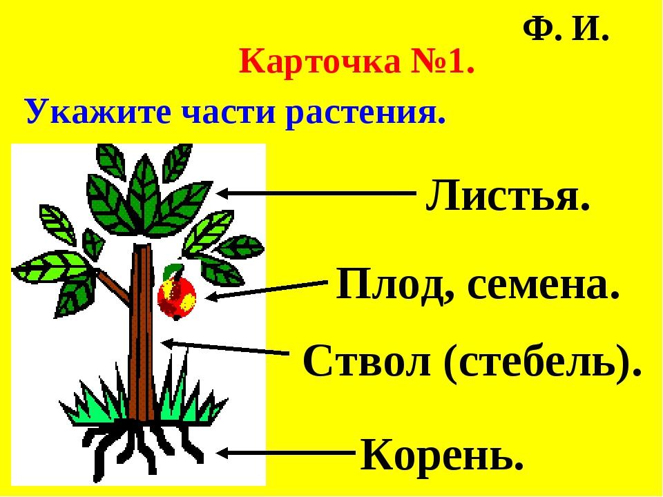 Карточка №1. Укажите части растения. Ф. И. Листья. Плод, семена. Ствол (стеб...
