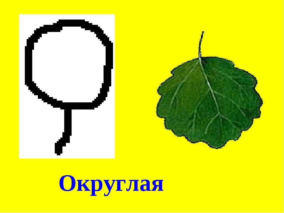 Округлая