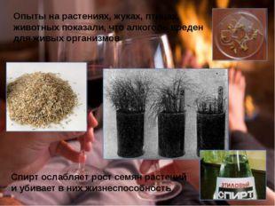 Опыты на растениях, жуках, птицах, животных показали, что алкоголь вреден для
