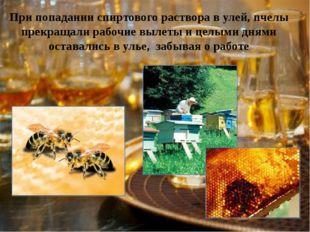 При попадании спиртового раствора в улей, пчелы прекращали рабочие вылеты и ц