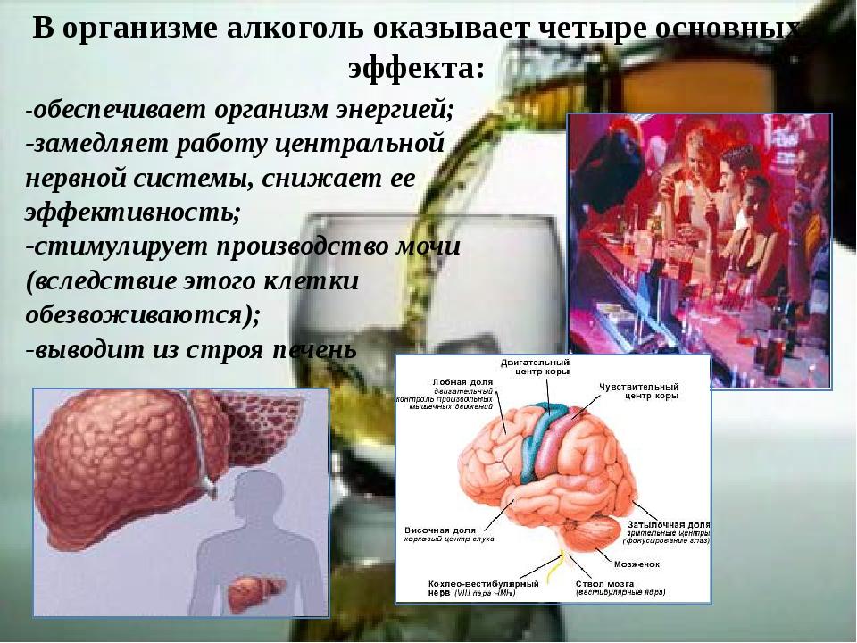 В организме алкоголь оказывает четыре основных эффекта: -обеспечивает организ...