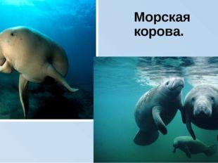 Морская корова.