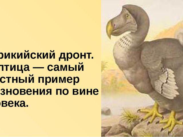 Маврикийский дронт. Эта птица — самый известный пример исчезновения по вине ч...