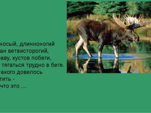 Горбоносый, длинноногий Великан ветвисторогий, Ест траву, кустов побеги, С