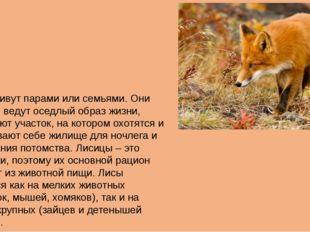 Лисы живут парами или семьями. Они обычно ведут оседлый образ жизни, занимают