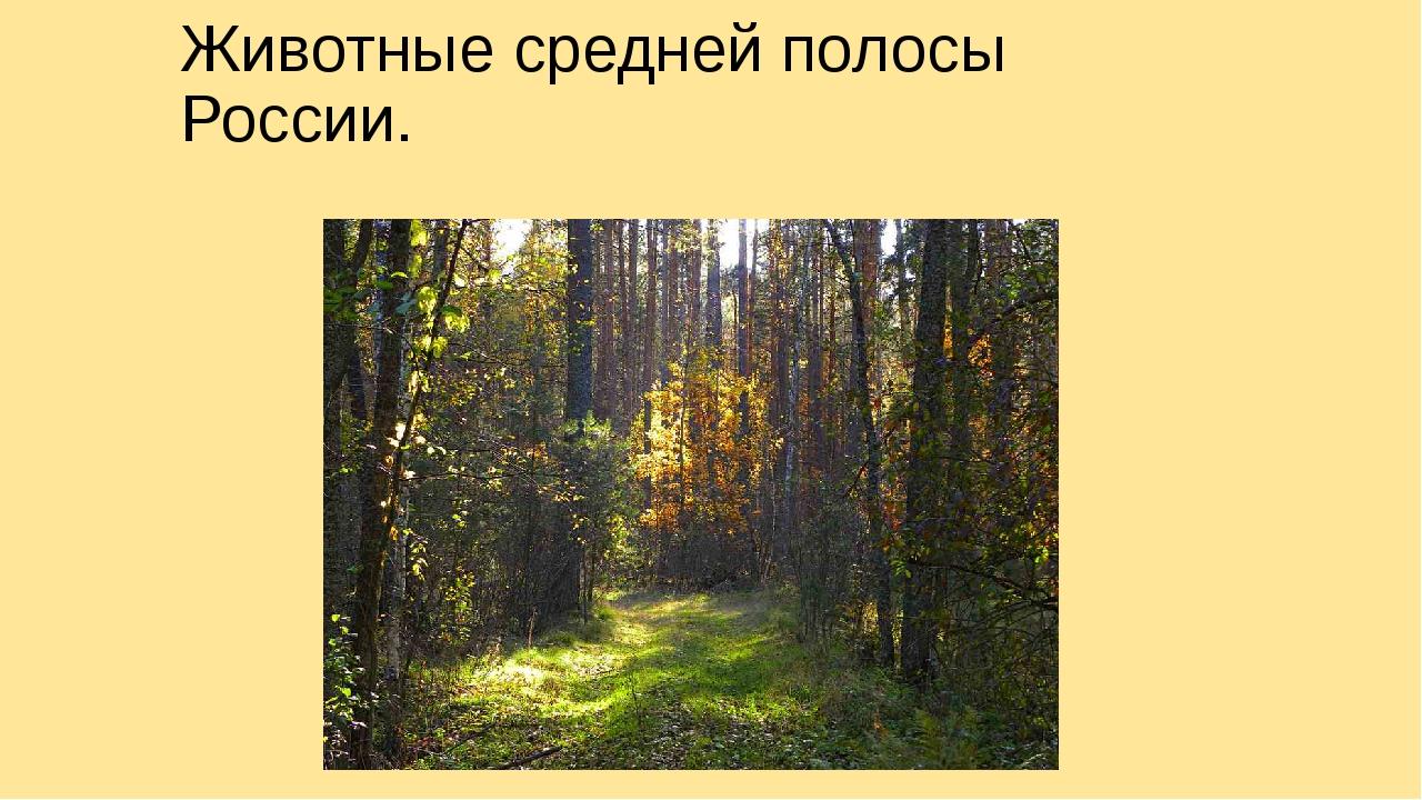 Животные средней полосы России.