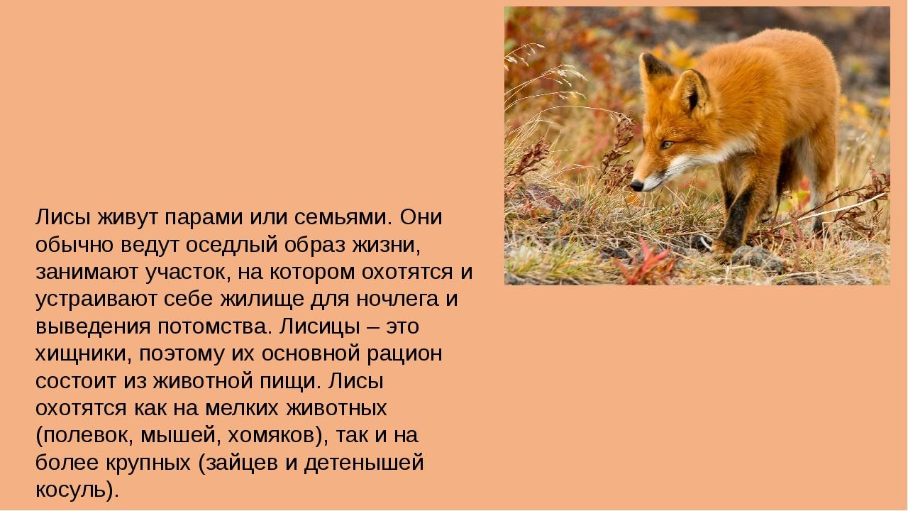 Лисы живут парами или семьями. Они обычно ведут оседлый образ жизни, занимают...