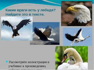 Какие враги есть у лебедя? Найдите это в тексте. Рассмотрите иллюстрации в уч