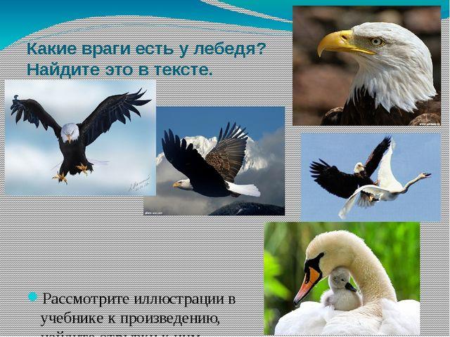 Какие враги есть у лебедя? Найдите это в тексте. Рассмотрите иллюстрации в уч...