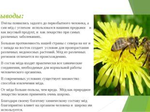 Выводы: Пчёлы появились задолго до первобытного человека, а сам мёд с успехом
