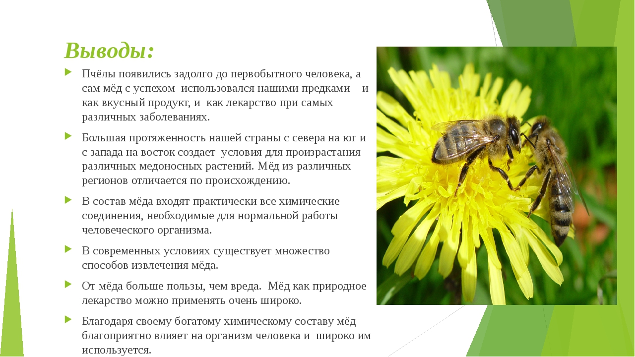 Выводы: Пчёлы появились задолго до первобытного человека, а сам мёд с успехом...