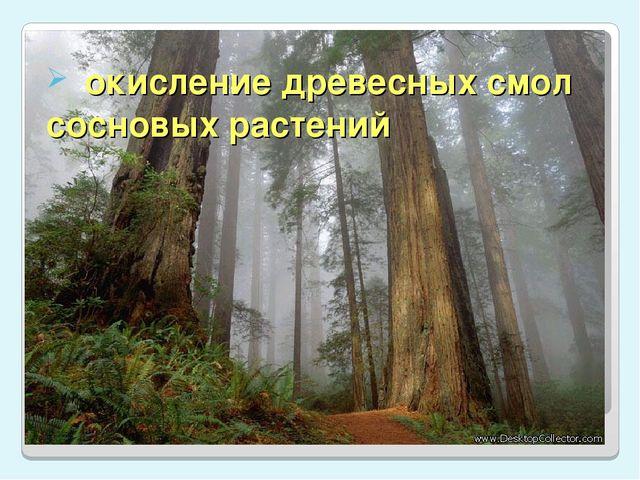 окисление древесных смол сосновых растений