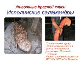 Животные Красной книги Исполинские саламандры Презентацию к уроку Окружающего