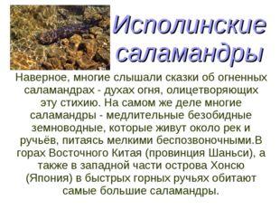 Исполинские саламандры Наверное, многие слышали сказки об огненных саламандра