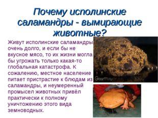 Почему исполинские саламандры - вымирающие животные? Живут исполинские салама