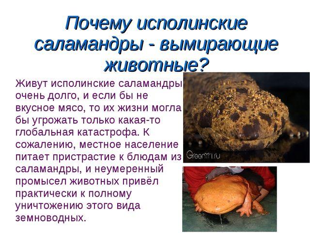 Почему исполинские саламандры - вымирающие животные? Живут исполинские салама...