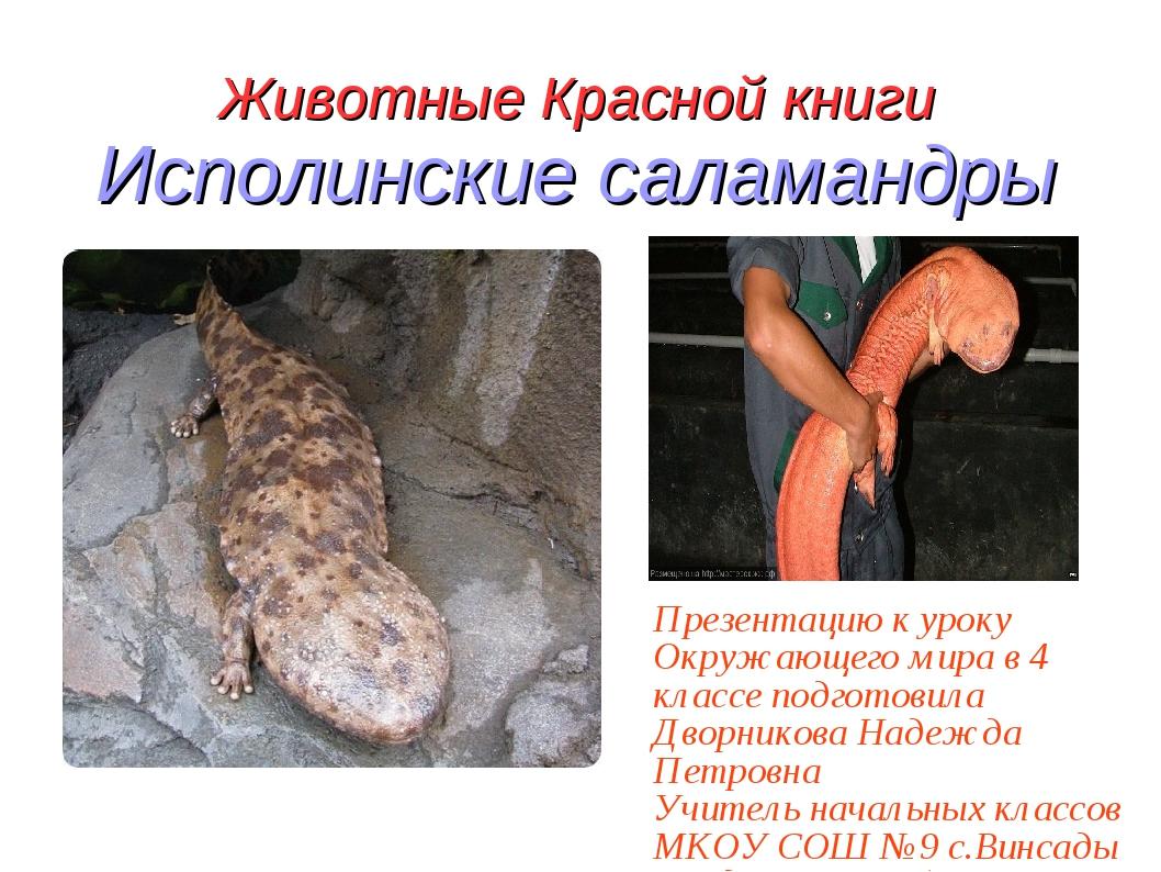 Животные Красной книги Исполинские саламандры Презентацию к уроку Окружающего...