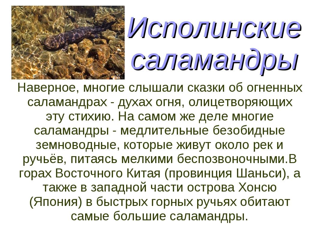 Исполинские саламандры Наверное, многие слышали сказки об огненных саламандра...