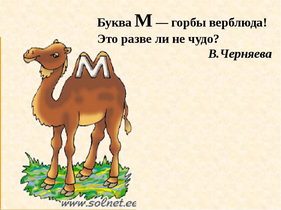 Буква М — горбы верблюда! Это разве ли не чудо? В.Черняева
