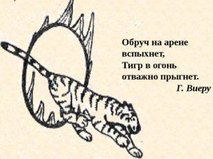Обруч на арене вспыхнет, Тигр в огонь отважно прыгнет. Г. Виеру