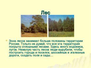 Лес Зона лесов занимает больше половины территории России. Только не думай,