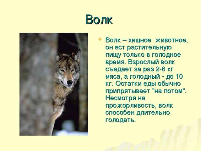 Волк Волк – хищное животное, он ест растительную пищу только в голодное время...