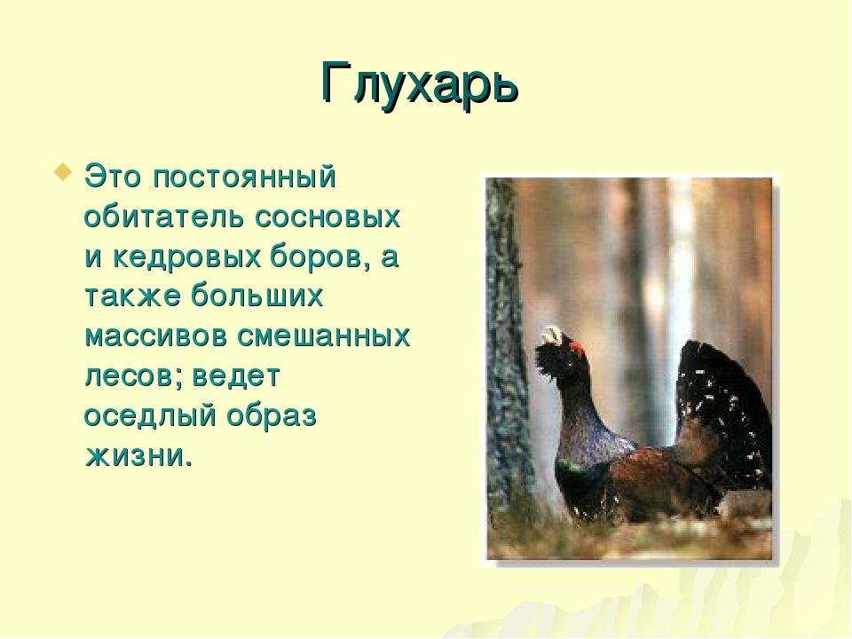 Глухарь Это постоянный обитатель сосновых и кедровых боров, а также больших м...