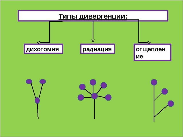 Типы дивергенции: дихотомия радиация отщепление