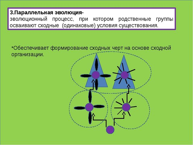 3.Параллельная эволюция- эволюционный процесс, при котором родственные групп...