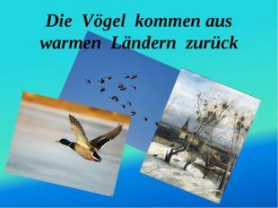 Die Vögel kommen aus warmen Ländern zurück