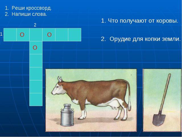 О О О 1 2 Что получают от коровы. Орудие для копки земли. Реши кроссворд. Нап...