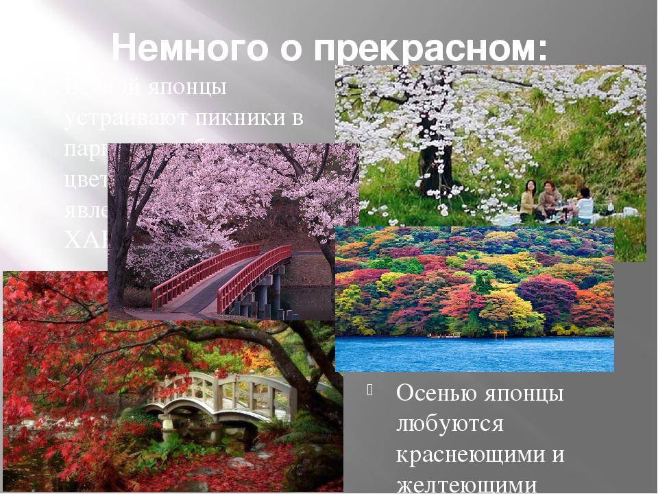 Немного о прекрасном: Весной японцы устраивают пикники в парках и любуются цв...