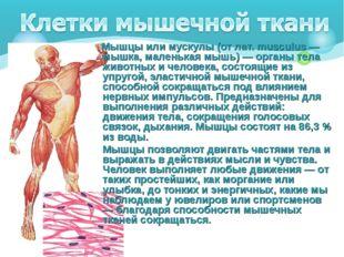 Мышцы или мускулы (от лат. musculus — мышка, маленькая мышь) — органы тела ж