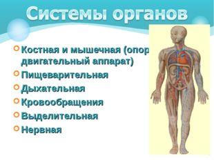 Костная и мышечная (опорно-двигательный аппарат) Пищеварительная Дыхательная